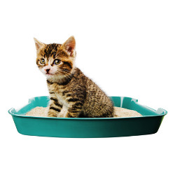 Cat Litters