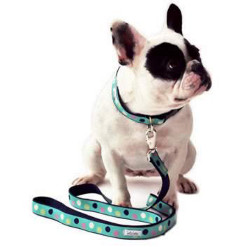 Collars, Harness & Leashes